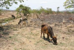 Sequía en Guatemala