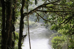 Amazon rainforest 1 - es