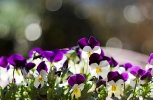 pensamientos, flores