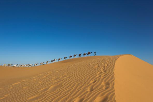 Muchos de los libros fueron llevados a Bamako a través de mil kilómetros de desierto (PHOTOGRAPH BY BRENT STIRTON, GETTY IMAGES/NATIONAL GEOGRAPHIC)