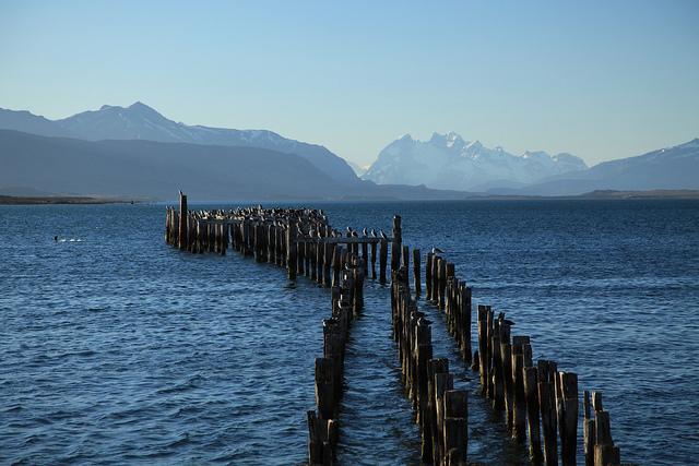 Colonia de cormoranes en Puerto Natales