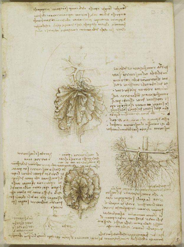 Este nuevo órgano, que ya Da Vinci había descrito en uno de sus textos sobre anatomía humana en el siglo XVI, une el intestino con la pared del abdomen y permite que se mantenga en posición.