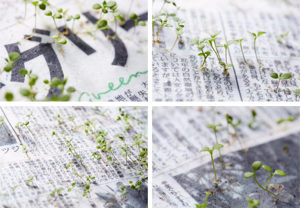 Green Newspaper