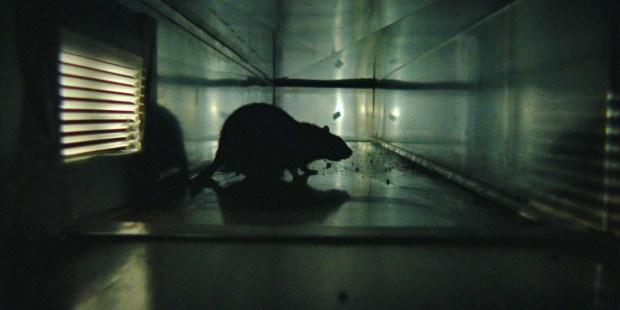 RATS-Netflix