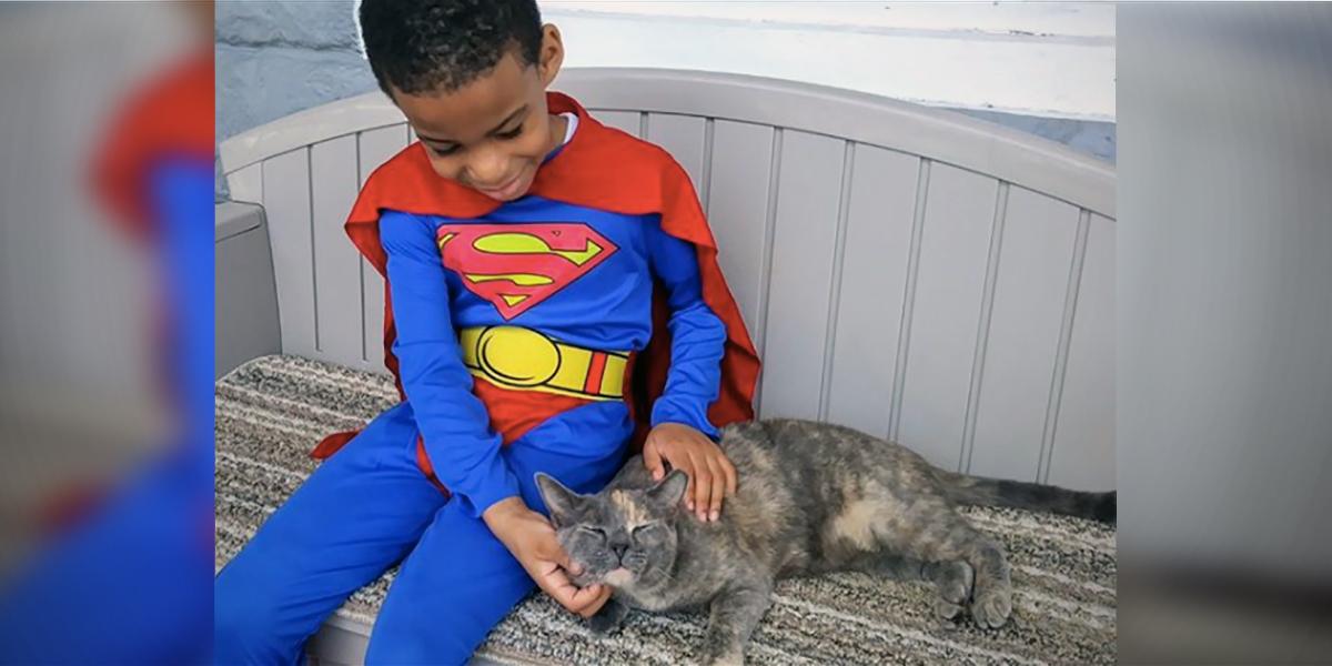 Shon Helping Stray Cats