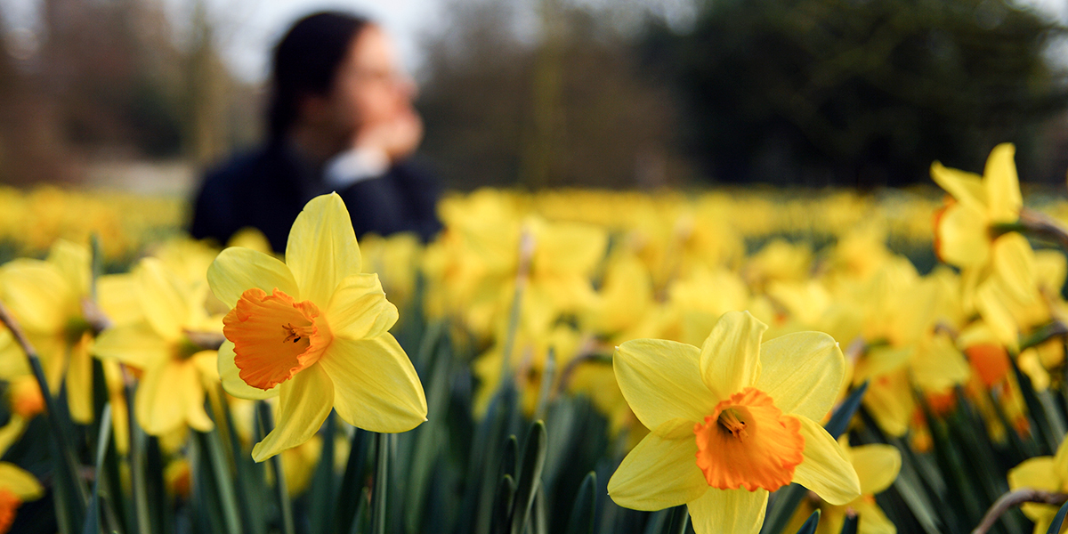 Woman in Flower Field