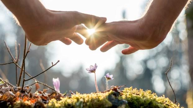 HANDS FLOWERS