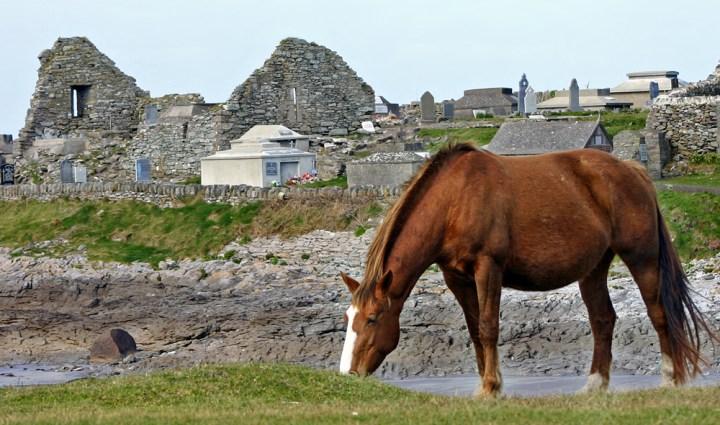HORSE IN IRELAND