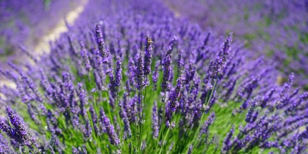 17-remedios-naturales-de-una-santa-herborista-que-traen-buen-humor-y-alegria-5387