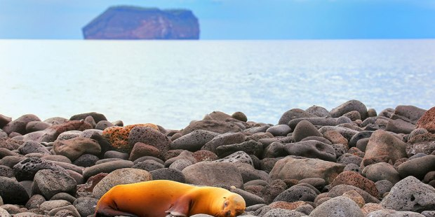 Las maravillas de Galápagos