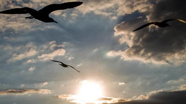 SUN,BIRDS,CLOUDS