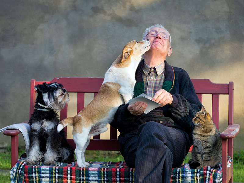 MAND WITH ANIMALS