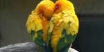 PAIR BIRD