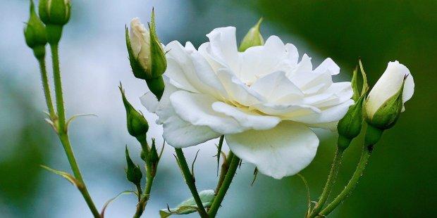 Bodas: las flores que necesitas para cada temporada