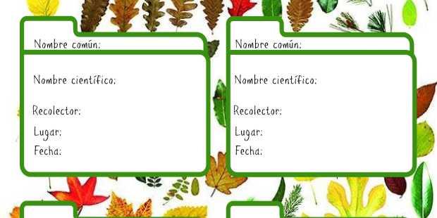 fichas herbario