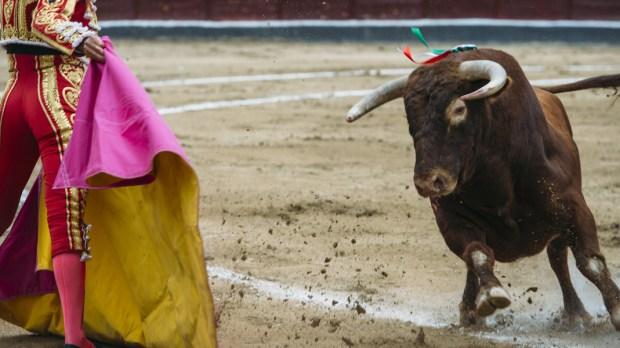 bullfighting toro